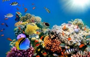 049_great_barrier_reef-1440x905